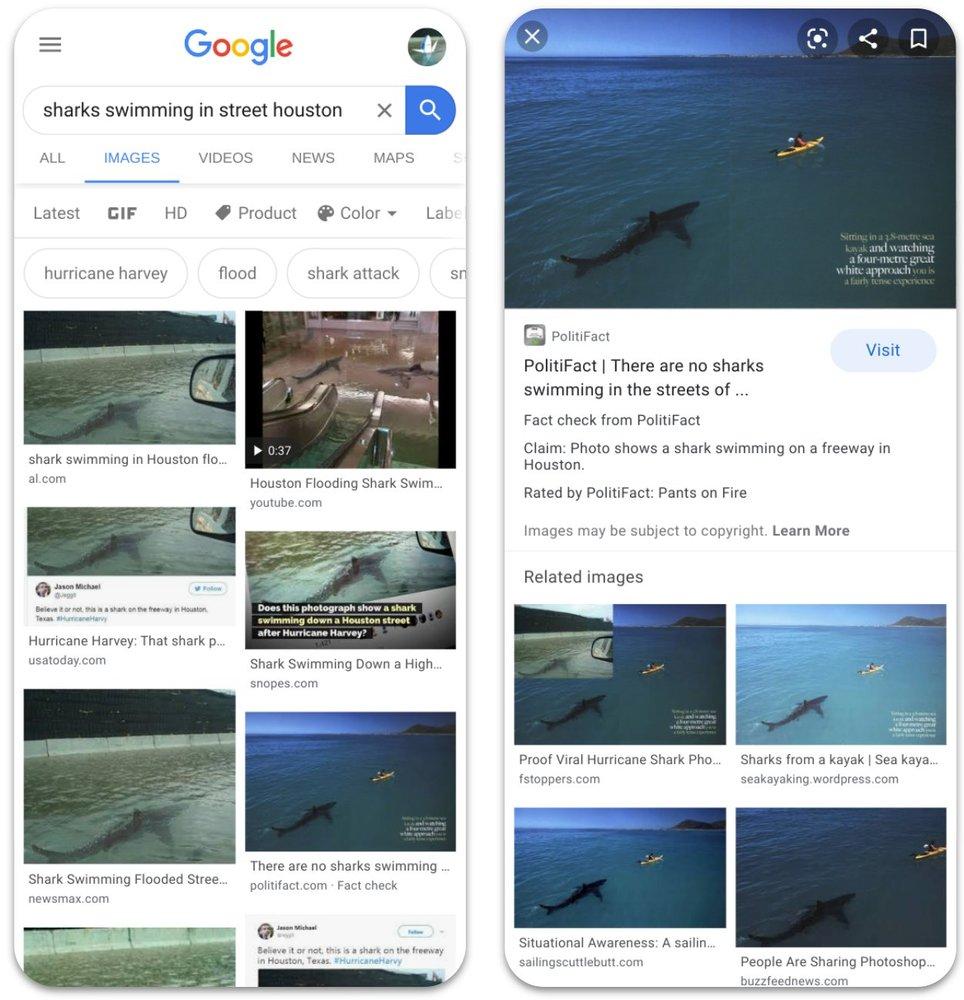 sharksswimming.jpeg