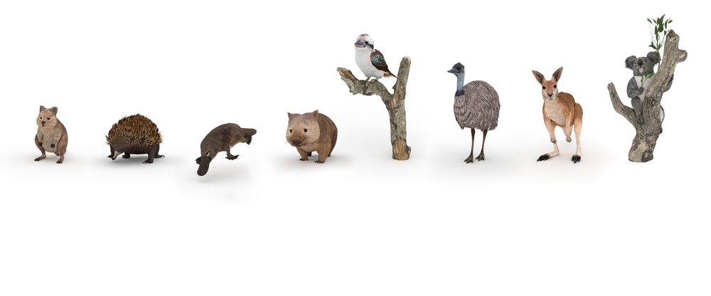 YouTube video: Aussie AR Animals